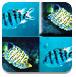 热带鱼连连看