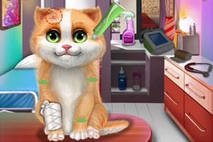 猫咪的护理