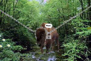 《解救乡村公牛》游戏画面1