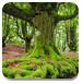 逃离诡异森林
