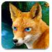 蓝眼狐狸森林逃脱