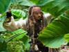 加勒比海盗拼图1