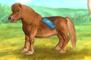 照顾可爱的小马
