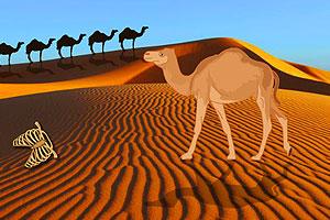 热带沙漠逃脱