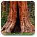 逃离红杉树国家公园