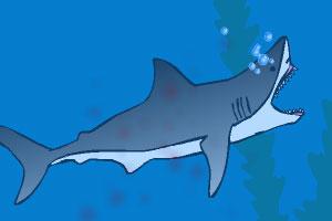 小鲨鱼深海成长