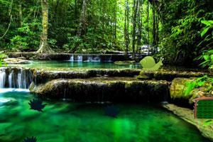 逃出热带森林