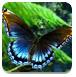 漂亮蝴蝶逃跑